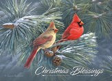 Cardinals in Pines, Boxed Christmas Cards