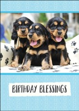 Birthday, Playful Puppies, Boxed cards (KJV)