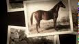 Thoroughbred History