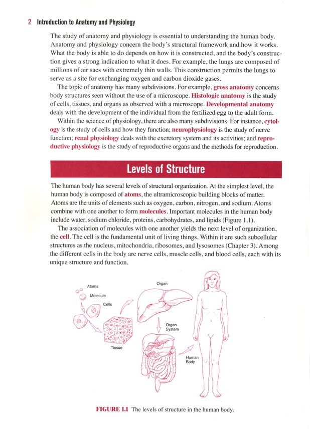 Barron\'s E-Z Anatomy & Physiology, 3rd Edition: I. Edward Alcamo ...