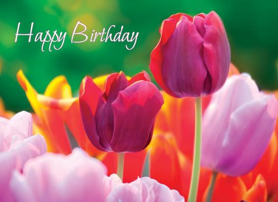 Beautiful Flowers Birthday Cards Box Of 12 Christianbook Com,Kitchen Helper Stool Ikea Hack