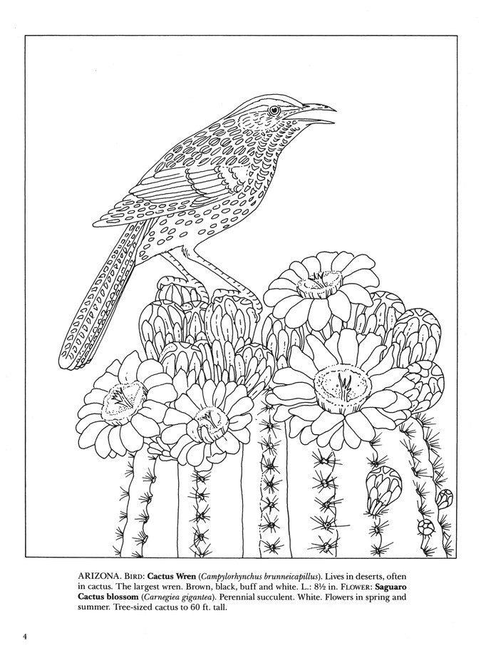 State Birds And Flowers - Coloring Book: Illustrated By: Annika Bernhard:  9780486264561 - Christianbook.com