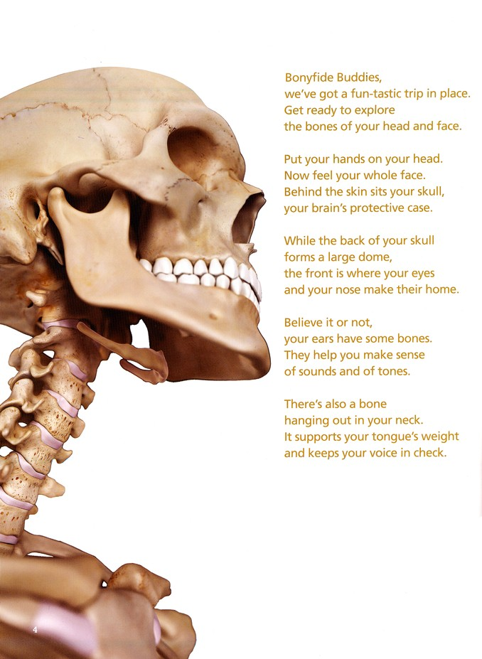 Bones of the Head, Face and Neck