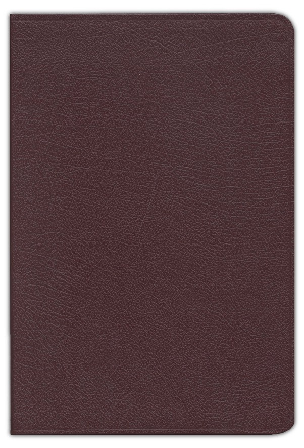KJV Zondervan Study Bible Large Print, Bonded Leather, Burgundy