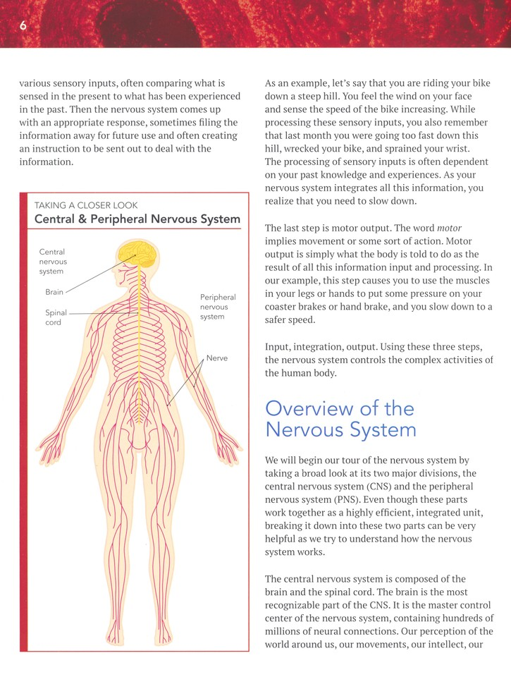 The Wonders of the Human Body Volume 3: The Nervous System: Dr ...