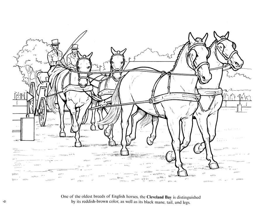 Big Book Of Horses To Color John Green 9780486451787