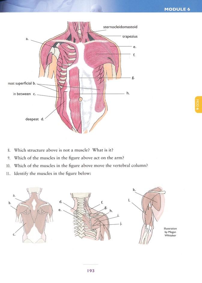 The Human Body Advanced Biology Student Textbook 2nd Edition Rachael Yunis Marilyn M Shannon 9781935495727