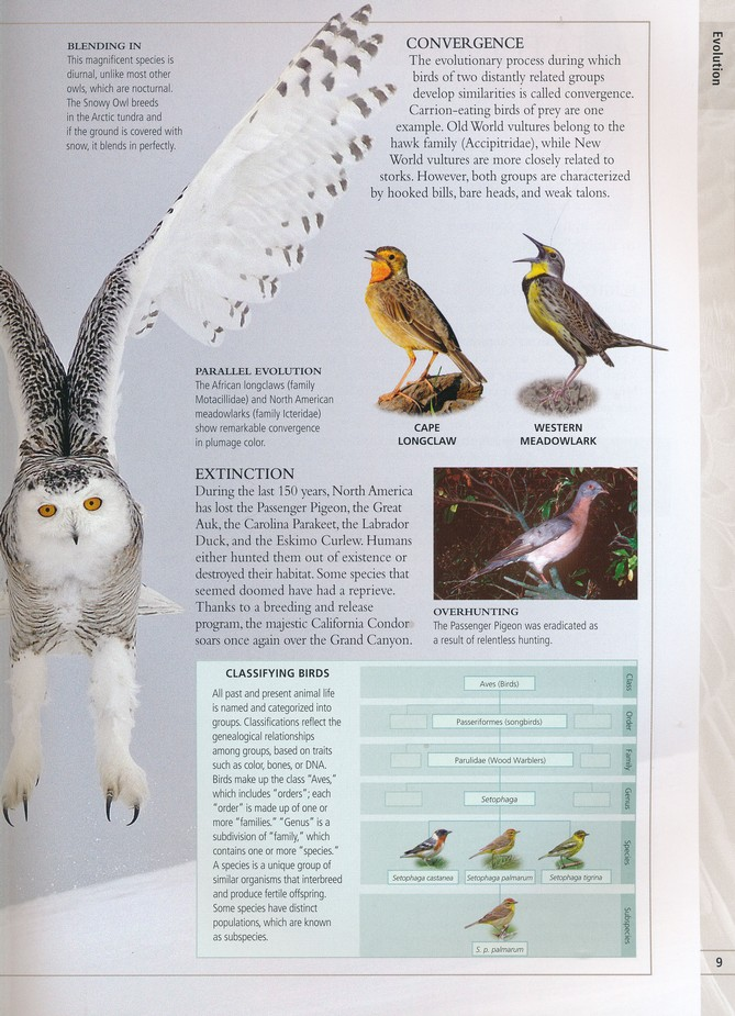 American Museum Of Natural History Birds Of North America Paul D Hess 9781465443991 Christianbook Com