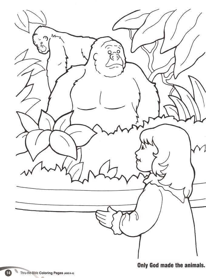 Thru-the-Bible Coloring Pages (Ages 6-8): 9780784717851 ...