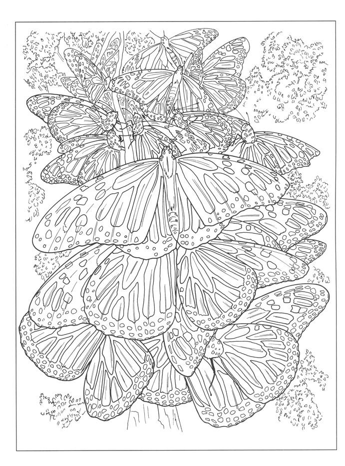 Beautiful Nature Designs Coloring Book Ruth Soffer 9780486823065