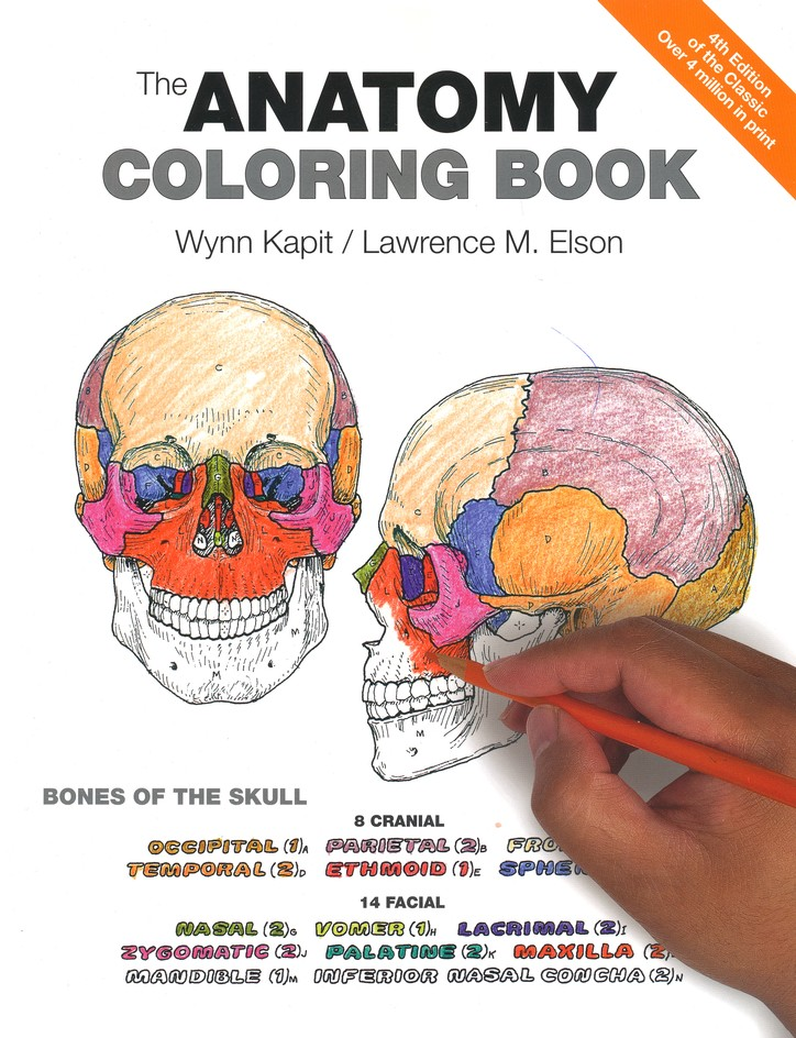 The Anatomy Coloring Book 4th Edition Wynn Kapit Lawrence M