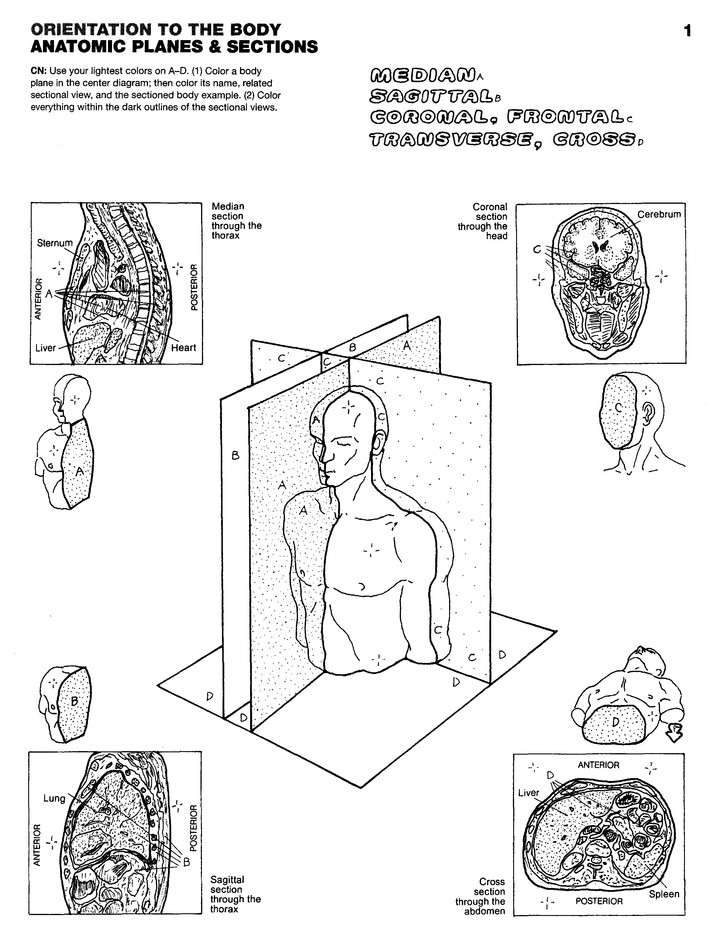63 The Anatomy Coloring Book Reviews Free Images