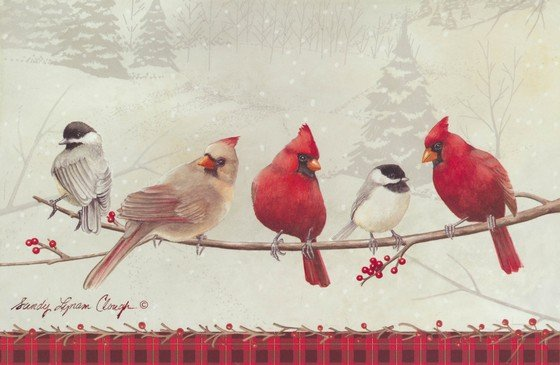 Birds On A Branch Boxed Christmas Cards Christianbook Com